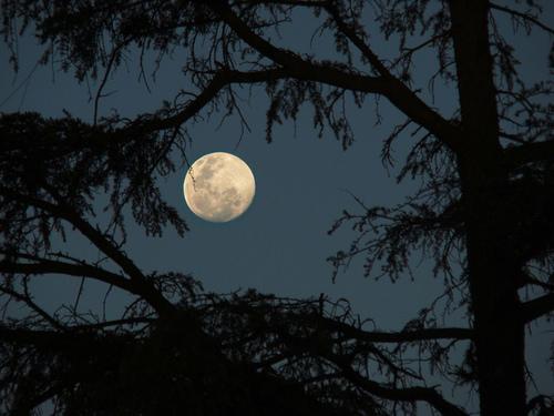 luna-llena-entre-los-arboles